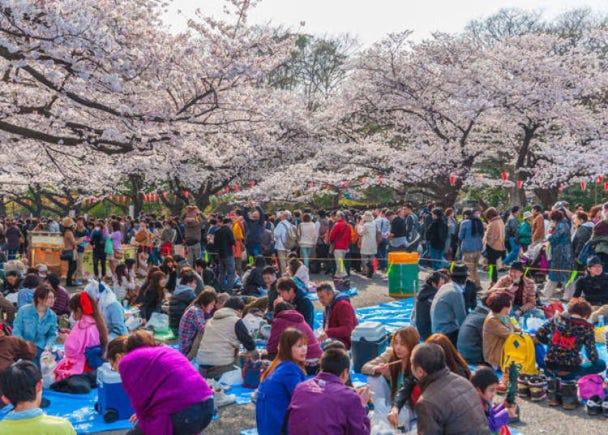 桜の名所がまるで漫画やアニメの世界みたいだった!