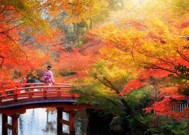 ■紅葉の美しさに感動!