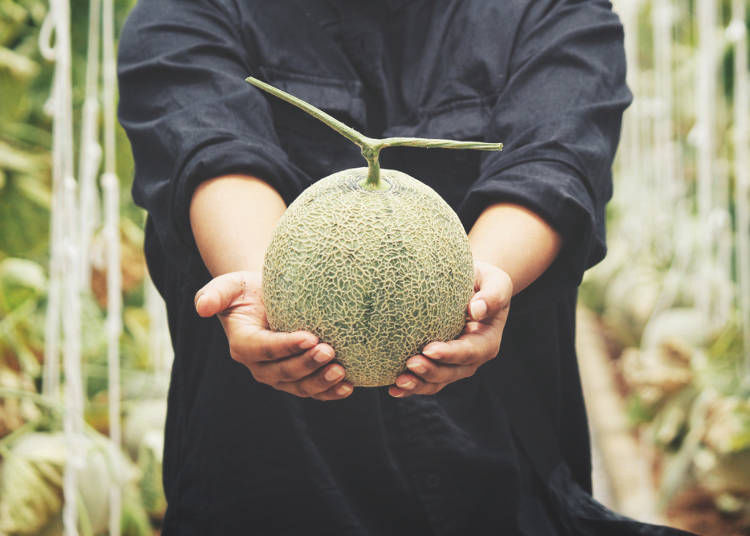 4. How to choose the most delicious melons