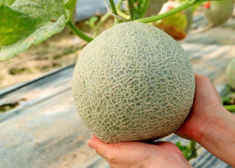 6. Main ways to enjoy melons