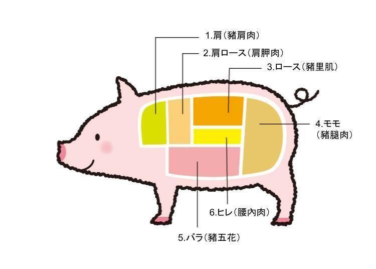猪肉各部位日语及特征