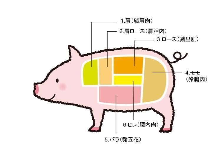 豬肉各部位日語及特徵