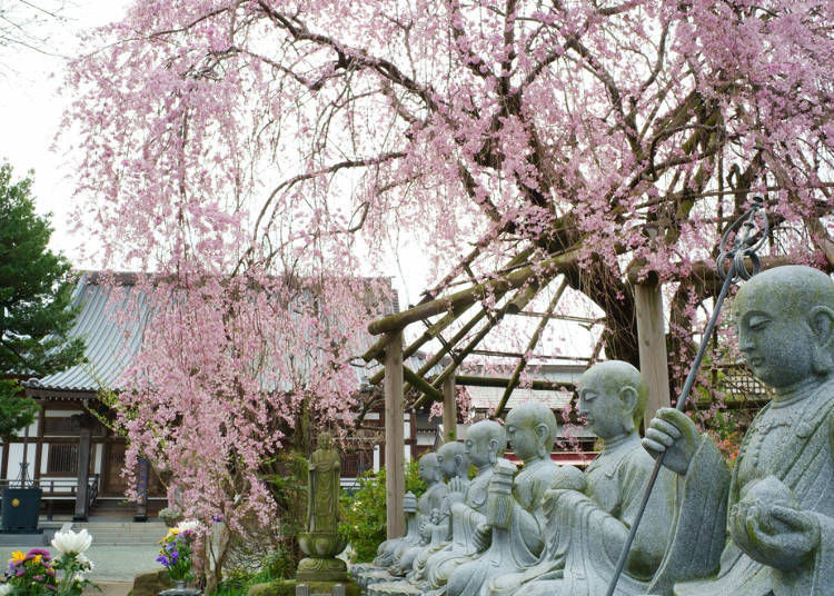 2. Flowering Times and Best Times to See Weeping Cherry Blossoms