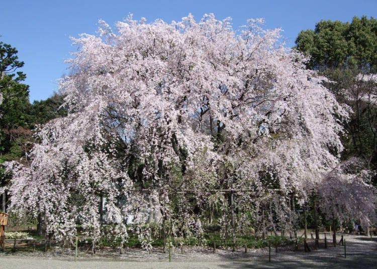 ④ Rikugien Gardens (Tokyo)