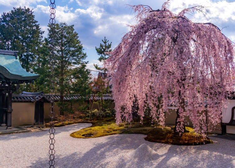 4.しだれ桜についてのよくある質問