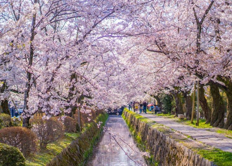 ③ Philosopher's Walk (Kyoto)