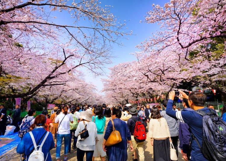 ④ Ueno Park (Tokyo)
