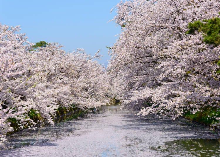 ① 히로사키 공원 (아오모리현)