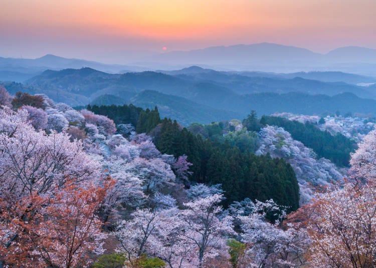1.染井吉野櫻的原產地