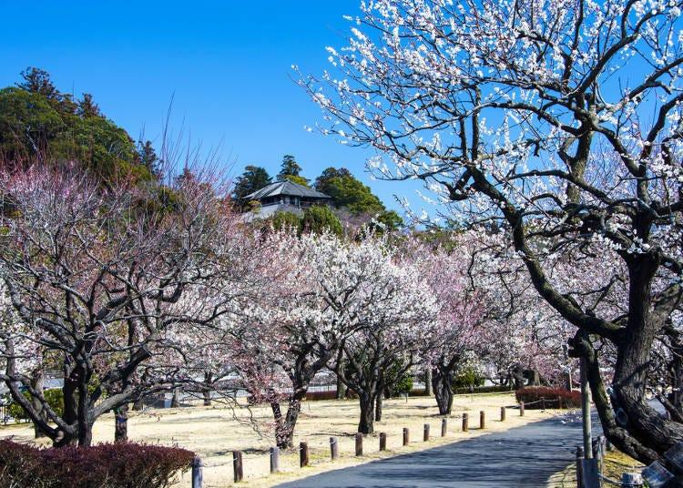 ① Kairakuen (Ibaraki Prefecture)