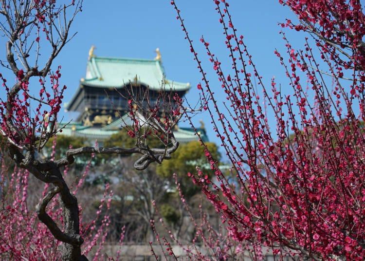 ② Osaka Castle Park (Osaka)