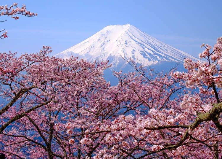 1. 매화, 복사꽃, 벚꽃과 일본문화와의 깊은 연관성