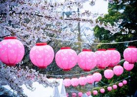 일본 각지에서 열리는 '벚꽃축제'는? '꽃놀이'과의 다른점과 유명 축제 총정리
