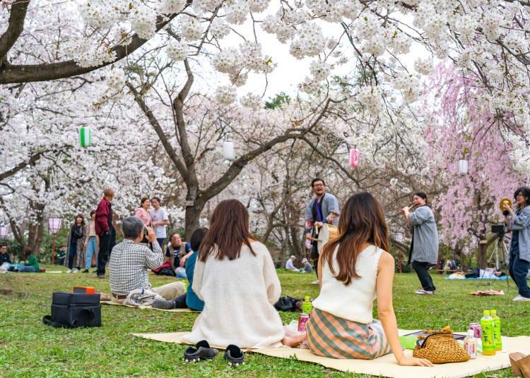 2. Hirosaki Cherry Blossom Festival (Hirosaki City, Aomori Prefecture)