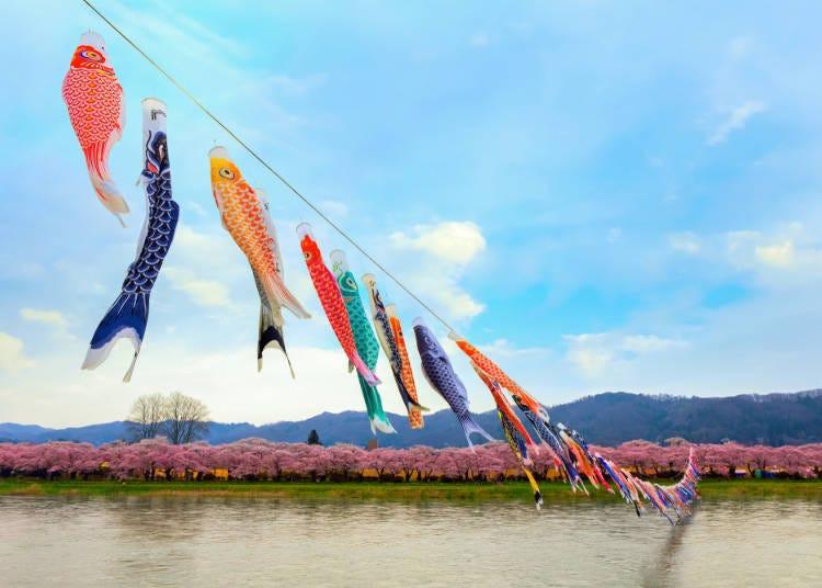 4. Kitakami Tenshochi Cherry Blossom Festival (Kitakami City, Iwate Prefecture)