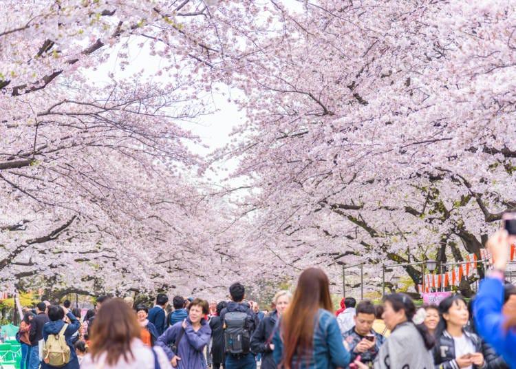 5. Ueno Cherry Blossom Festival (Tokyo)