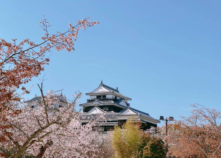 10. Matsuyama Spring Festival (Ehime Prefecture)