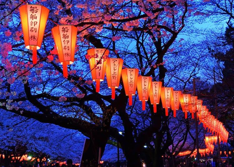 2.櫻花祭的歷史小故事