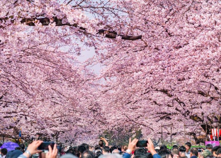 1. 에도시대부터 이어진 벚꽃명소에서 지역색이 뚜렷한 꽃놀이를 즐겨보자. 우에노 공원과 가까운 '호텔 리솔 우에노'
