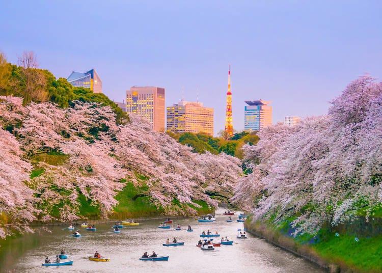 2. 고쿄(황궁)의 해자를 따라 이어지는 '벚꽃 터널'이 압권! 지도리가후치 산책로와 가까운 '호텔 빌라 폰테인 도쿄 구단시타'