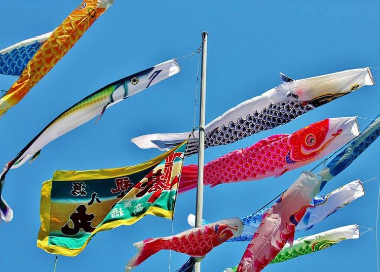 잉어들 사이에서 총 6m 길이의 '꽁치 깃발'을 찾아보자