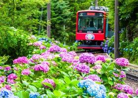 도쿄 근교의 수국 명소 5곳! 시즌과 명소의 정리!