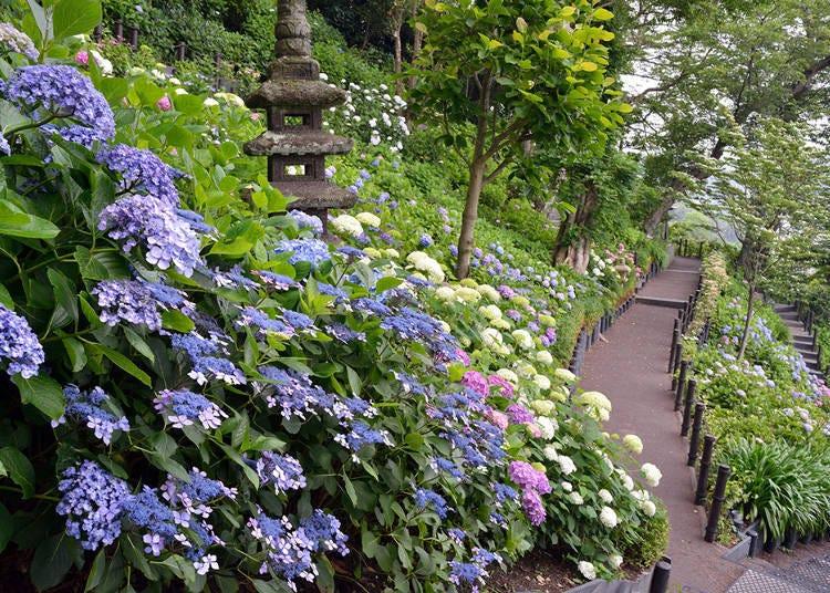 1. Hasedera Temple: Stunning Hydrangea Gardens with Ocean Backdrops (Kamakura)