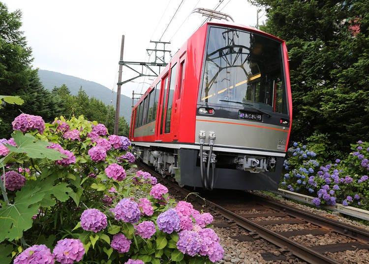 3. The Ajisai Train: A Journey Through the Mountainside Hydrangea (Hakone)