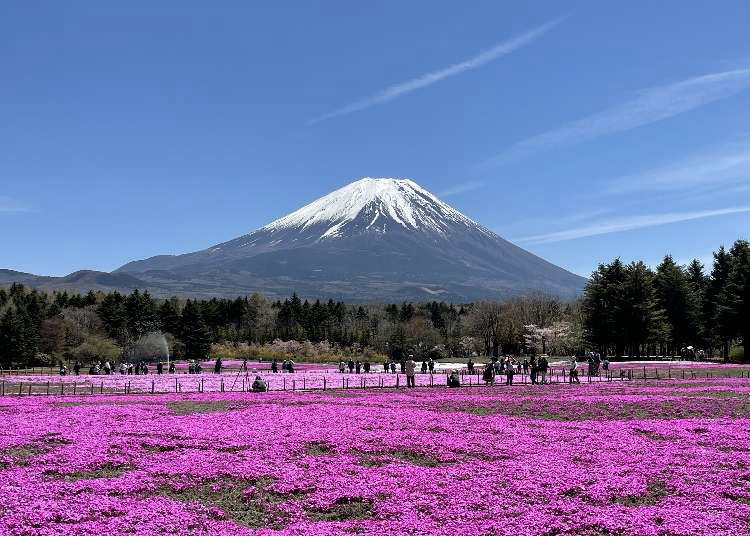 5 Unmissable Spots for Spectacular Views of Mt. Fuji (Spring 2021