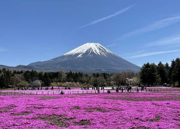 【2021最新】享受春光無限的美景!富士山周邊春季必賞景點5選