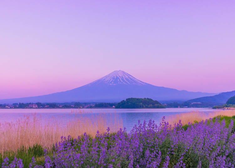 18. Lake Kawaguchiko Herb Festival