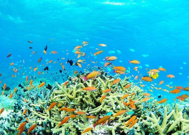 如詩如畫的美麗海景!去石垣島一定要體驗的事情20選