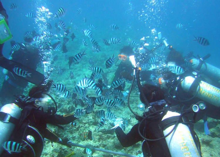 2.深潛&浮潛