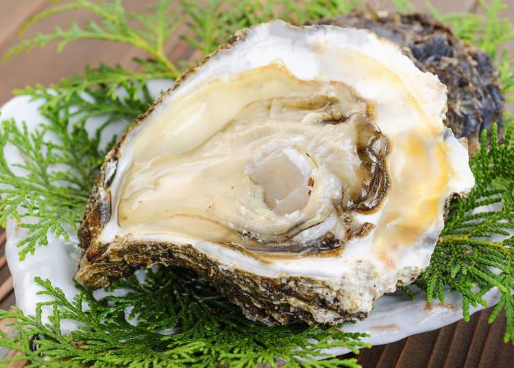 3.岩牡蠣(日本岩蠔)