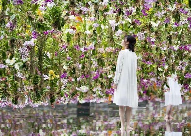 도쿄여행 볼거리- 팀 랩(Team Lab) 플래닛 뉴 오픈! 공중에 피어있는 수많은 난에 둘러싸인 정원이 상상 이상으로 환상적이다!