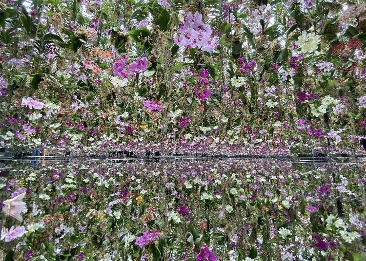 美到讓人摒息!鮮嫩蘭花環繞的庭園/漂浮的花園—花朵與我同根同源,花園與我合為一體