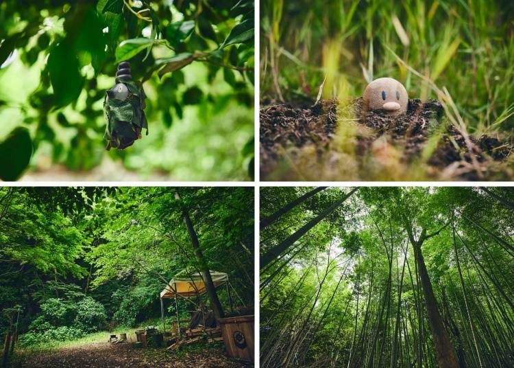 An Untouched Forest for Nearly 20 Years Sets the Stage for Adventure