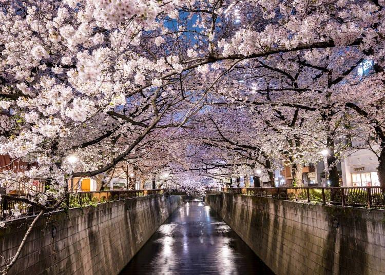 世界各地から観光客が殺到!日本のお花見とは?