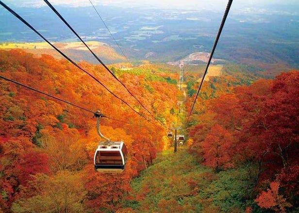 도쿄 주변의 단풍 여행 - 가을의 멋진 단풍을 볼 수 있는 3곳