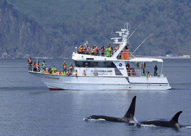 시레토코 여행 볼거리는 역시 자연! 크루즈를 타고 고래와 돌고래를 만나보다!