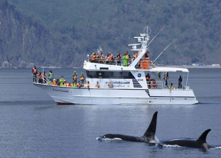 Hokkaido Whale Watching Experience: Tour From Shiretoko World Heritage Site!
