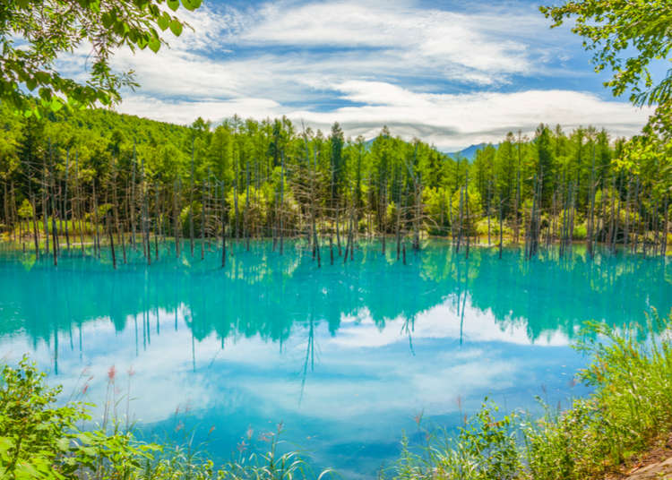 Top 5 Things to Do in Hokkaido's Biei and Furano Area: Shirogane Blue Pond, Lavender Fields, And More!