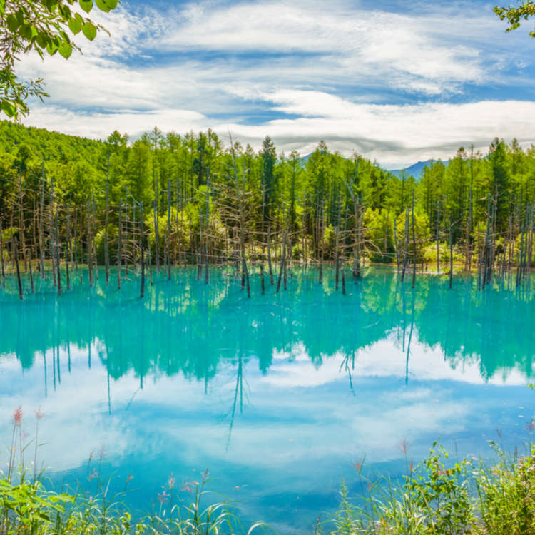 Aoike Blue Pond and More: 5 Sightseeing Spots You Can't Miss in Hokkaido's Furano and Biei Area!