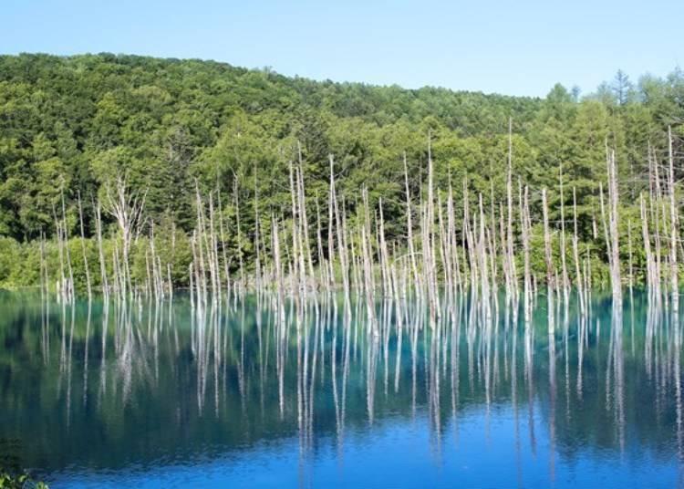 2. 파란연못(아오이 이케) - 입소문으로 단박에 유명해진 신비로운 분위기의 인기 명소