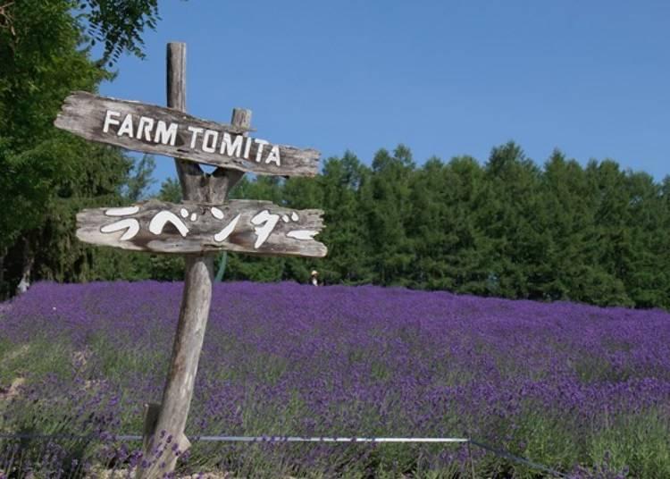 富良野、美瑛推薦景點④以薰衣草田聞名的「富田農場」