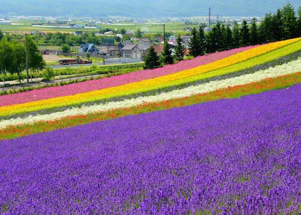 從札幌到富良野、美瑛當日來回!一日遊行程示範
