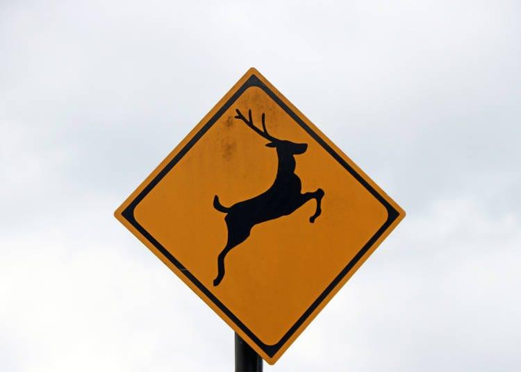 ポイント3)動物の飛び出しも!スピードの出し過ぎに注意