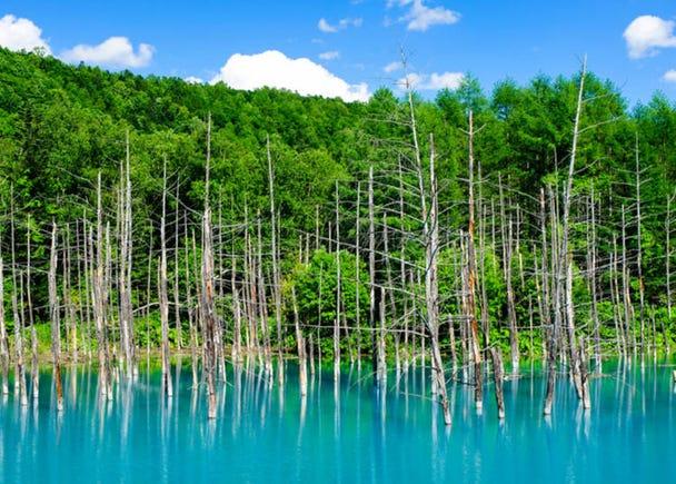 3.白金 青い池