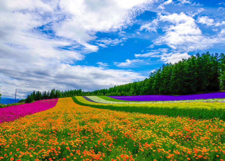 Best Time to Visit Hokkaido: 5 Must-Know Things About Hokkaido's Weather!