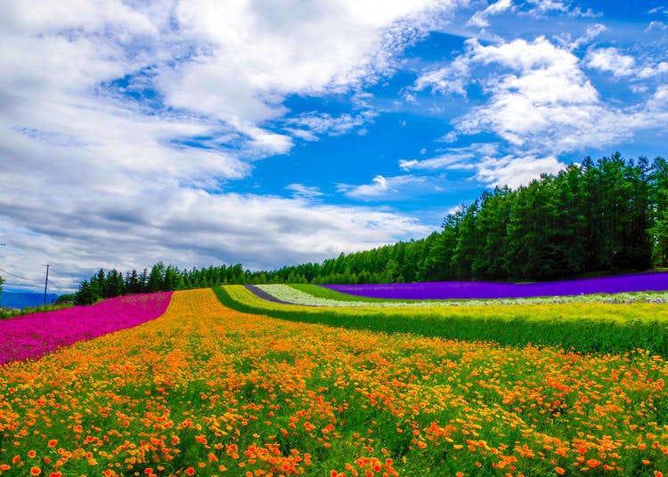 北海道旅遊前你一定要知道的「北海道各種天氣特色」